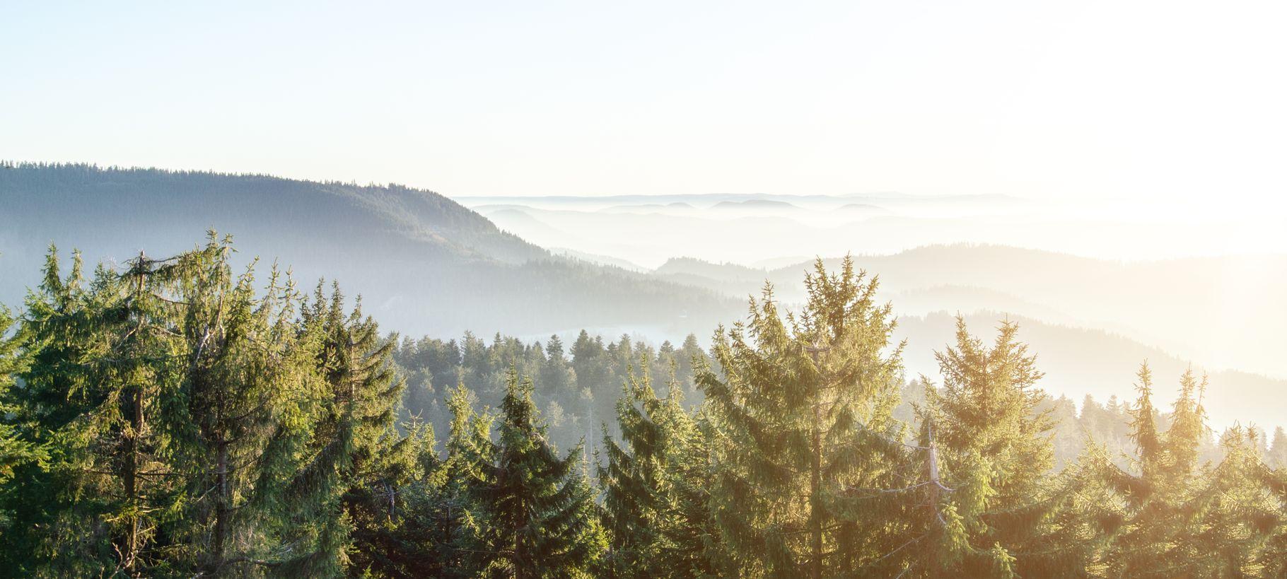 Von Wäldern und Bäumen – Internationaler Tag des Baumes